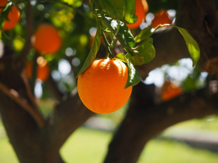 oranges douces